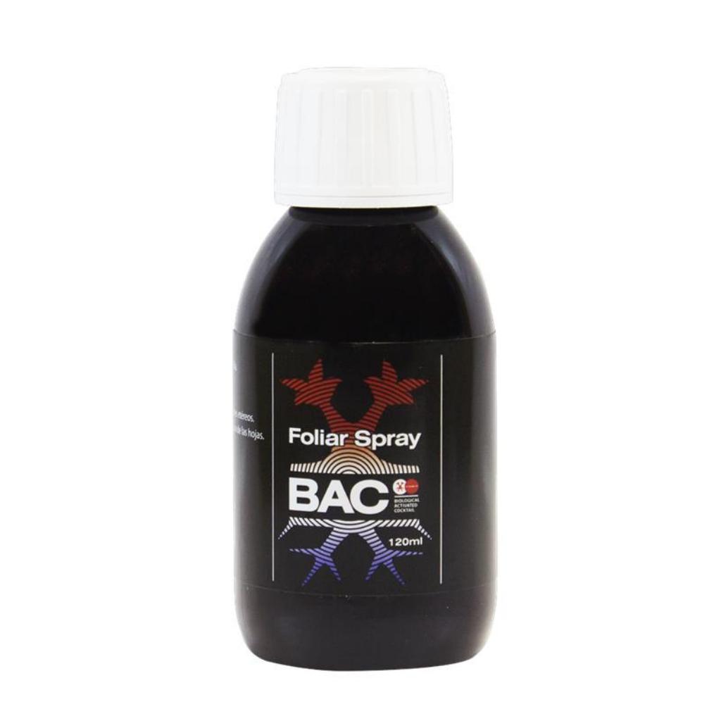 BACC0033
